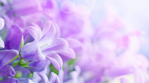 lilac-flowers-live-wallpaper-057cca-h900